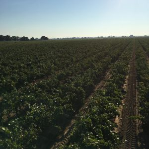 The view from atop the harvester!
