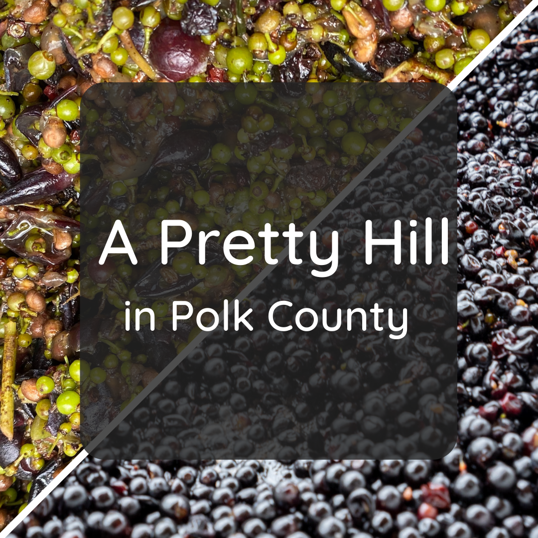 A Pretty Hill in Polk County