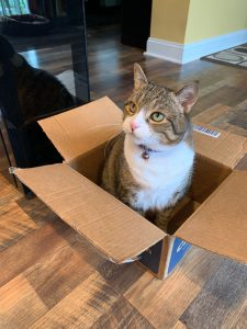 Sami the Wine Cat loves her boxes