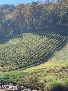 Stone Ashe Vineyards - Hendersonville, NC