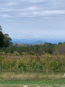 Vineyard and Blue Ridge at Marked Tree Vineyard - Flat Rock, NC